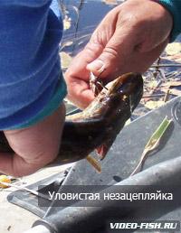 отбойник на рыбалку видео