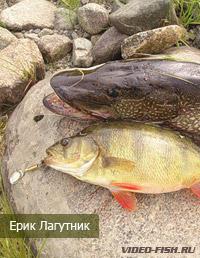 рыбалка на ерике золотой