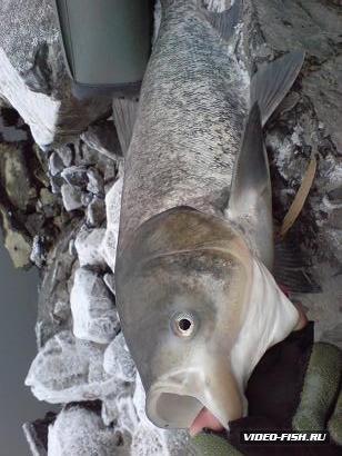 прогноз клева по рыбнице