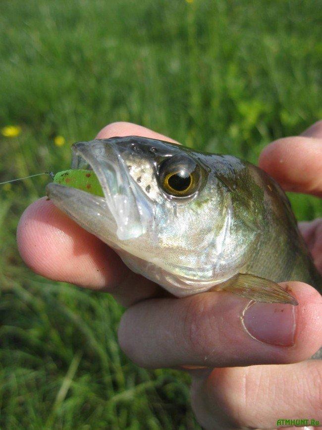 видео-фильм о рыбалке на окуня