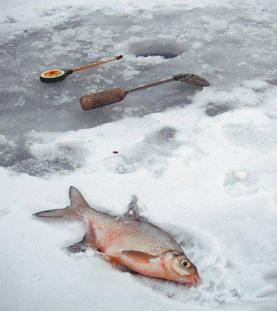 все о рыбалке на леща в марте
