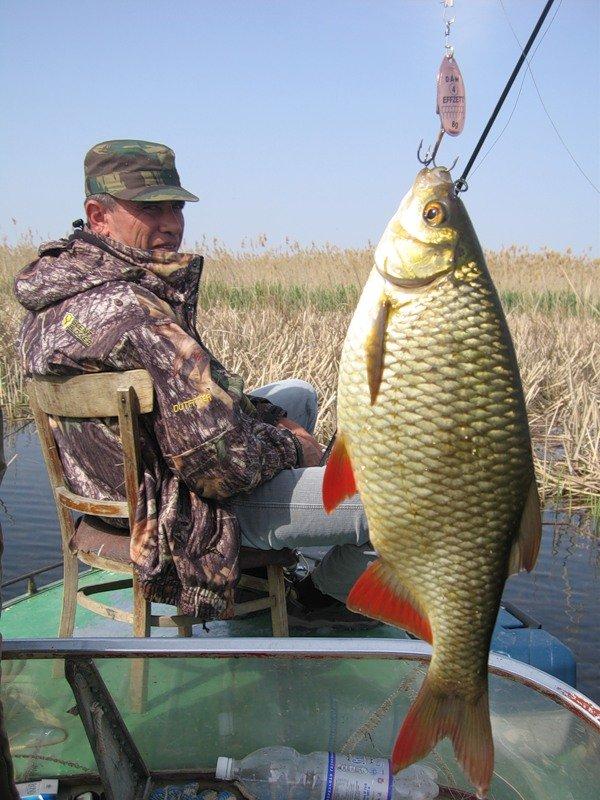 рыбалка как ловить красноперку
