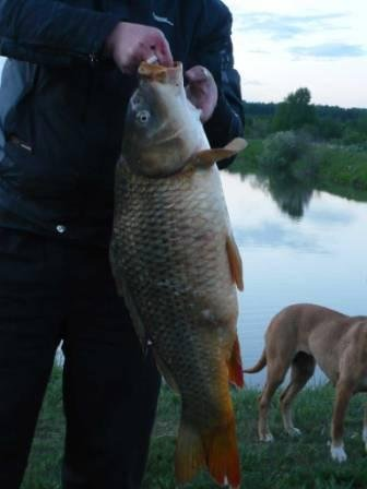 пуговичинский пруд рыбалка отзывы