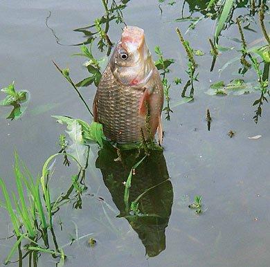 какая рыба клюет в ноябре на урале