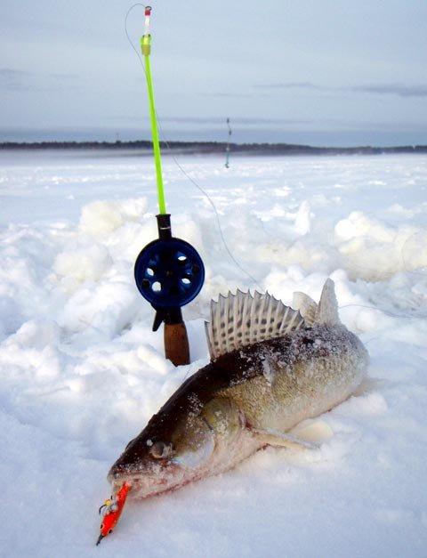 погода для рыбалки на судака
