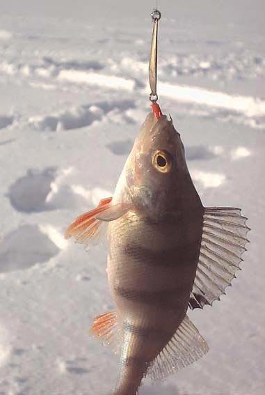рыбалка на ольшанских карьерах