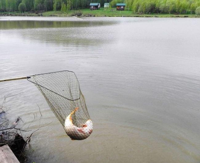 зеркальные пруды рязанская область рыбалка